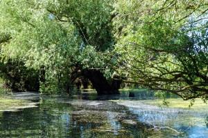 excursii-delta-dunarii-galerie-15